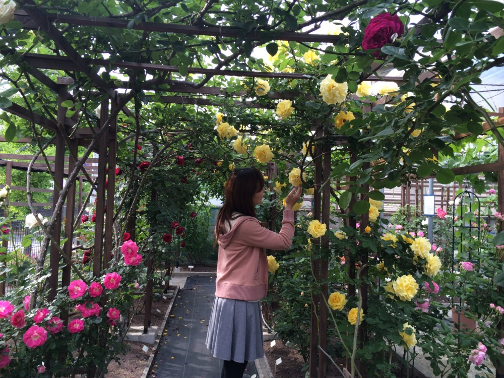 大阪狭山のオープンガーデン「薔薇」