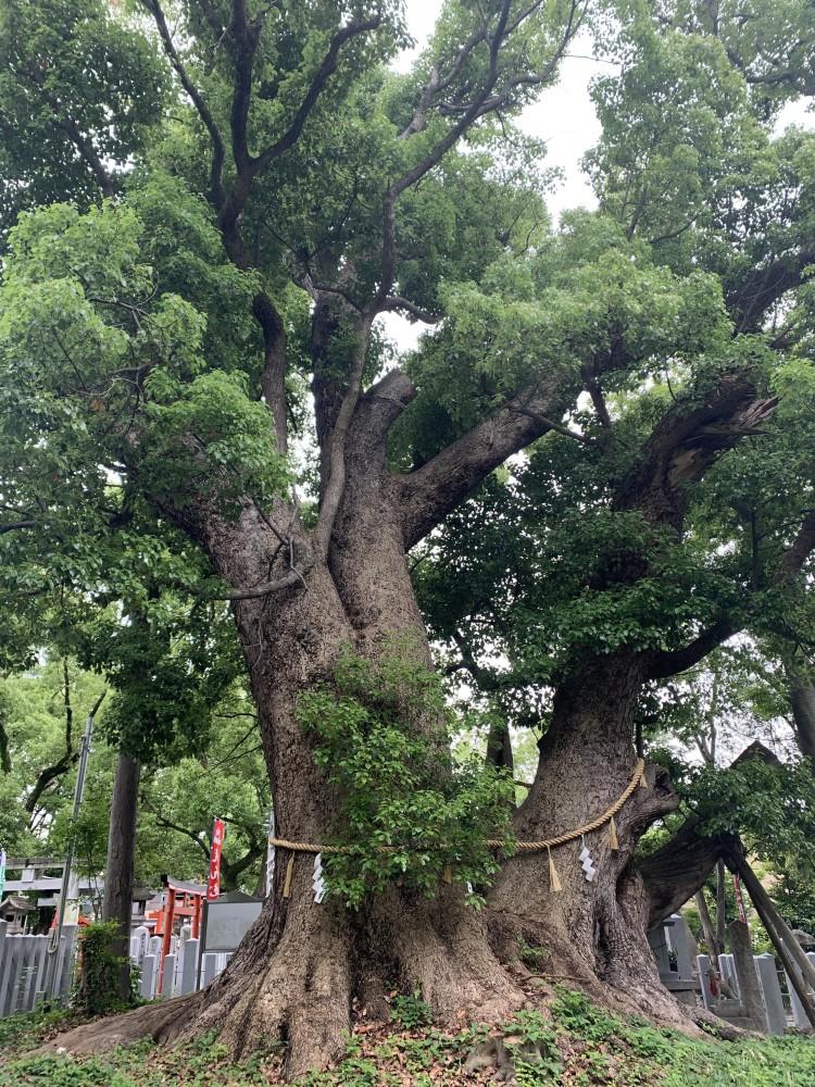 信太森神社